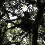 Colobus-Affen bei unserem Mittagscamp