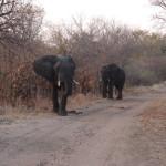 Den Elefanten ganz nah bei den Falls