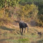 Vorbei an den Elefanten