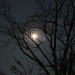 Der Mond scheint hell am Himmel