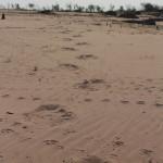 Elefantenspuren im Sand