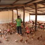 Meine Unterstützung bei den Hühnern
