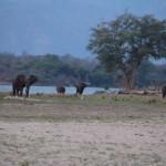 Die Elefanten sollte später noch unser Camp besuchen