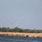 Eine Horde Vögel macht den Abflug