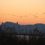 Die Vogelschwärme ziehen an uns vorbei