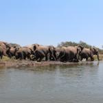 Elefantenherde, die parallel zu uns das Ufer entlang läuft