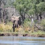 Von Elefanten kann man nie genug bekommen