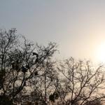 Eine Herde Affen in den Bäumen