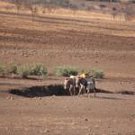 Masai mit ihren Lastentieren