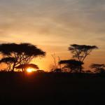Guten Morgen Serengeti