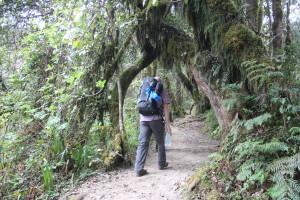 Erste Etappe am Kili durch den Regenwald