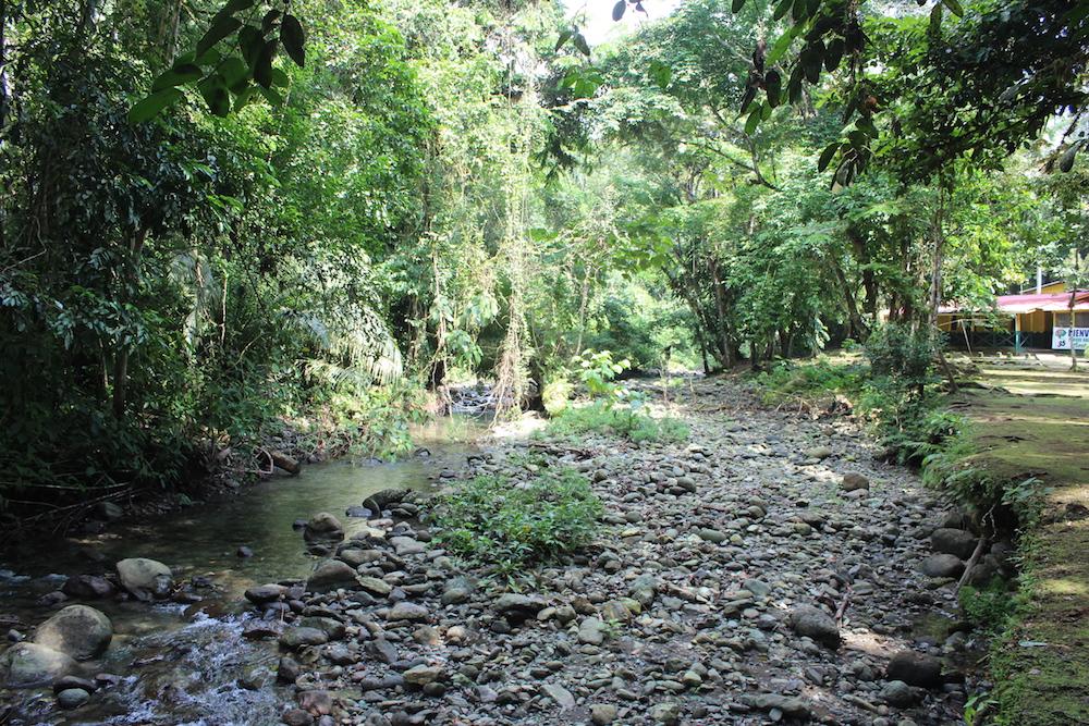 Regenwald im Darien Nationalpark