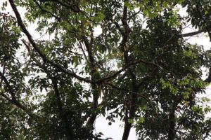 Papagei im Baumwipfel