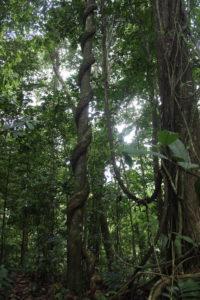 Impressionen aus dem Regenwald