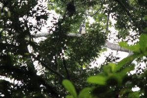 Harpyien im Baum